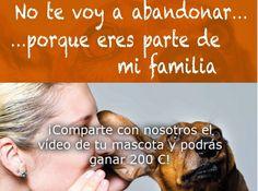 Concurso videos mascotas 2014 Videos, Pageants, Pets, Activities, Video Clip