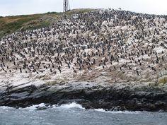 Isla de Los Pájaros - Canal de Beagle