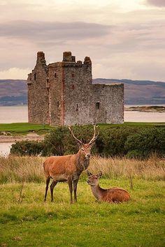 Lochranza Castle,Isle of Arran,Scotland.