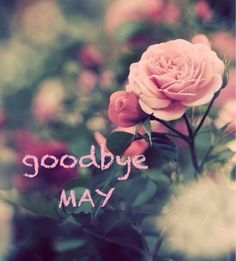 Goodbye May quotes quote may months june hello june goodbye may