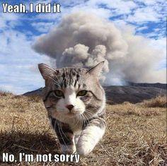 Yeah, I did it No, I'm not sorry http://ibeebz.com