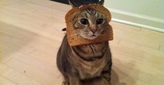 Friendly pranks to play on your precious pets.