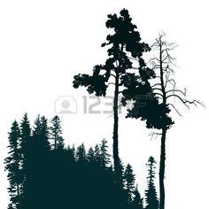 affiche de style r�tro avec des conif�res paysage forestier photo