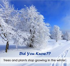 Did You Know??  Trees and plants stop growing in the winter.
