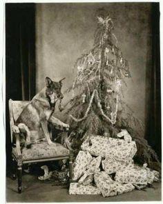 Rin Tin Tin Christmas | Golden Age of Hollywood