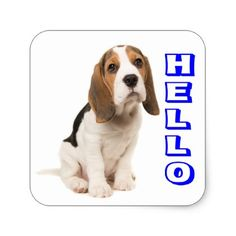 #Beagle Puppy Dog Blue Hello Thinking of You Square Sticker - #beagle #puppy #beagles #dog #dogs #pet #pets
