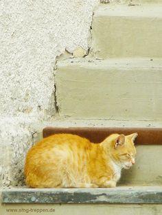 Die rote Katze auf der Treppe! Treppen Stairs Escaleras photo by www.smg-treppen.de #smgtreppen