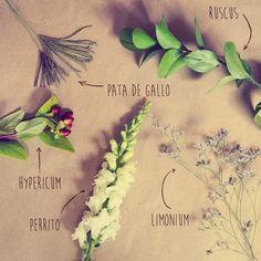Conoce de flores @letitflowmx #flowers #flores #leitflow #flow #love #tbt #trichelium #limonium #hypericum #cool #coolflowers #comingsoon #muypronto