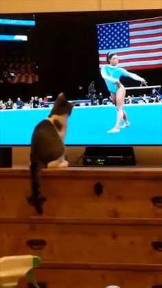 Funny Categories Fuunyy Very rare to see a cat right at the start of her coaching career 🐈🤸 Funny cat videos, funny cat videos, cat videos funny, cute cat videos. kitty videos funny, cute kitty videos Cat Lovers Source by Funny Cute Cats, Cute Cat Gif, Cute Funny Animals, Cute Baby Animals, Animals And Pets, Cute Cat Video, Cute Animal Videos, Funny Animal Pictures, Gato Gif