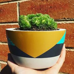 THE BEST F E E L I N G succulent going around! Stick your finger in it! #succulents #succulentcreations #succulent #succulenthomes #welovesucculents #plants #succulentsmelbourne #plantlovers #nomaintance #pottymouthpots #succulovers #instasucculent #concretepots #concretehomewares #concretepotsmelbourne #concrete #handcraft #handmade #withlove #concreteisgreat #handcraftconcrete #concretepotsmelbourne by pottymouthdesigns