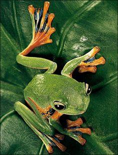 Die 13 besten Bilder von Frosch... malen | Coloring book ...