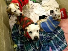 Your Ugly Old Sweaters Could Mean The World To A Shelter Pet