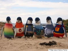 PENGUINS IN SWEATERS!!!!!  Australias Oldest Man Knits Tiny Sweaters For Penguins Injured In Oil Spills