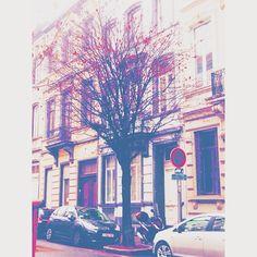 Ruby red #brussels #bruxelles #belgium #belgique #ixelles #elsene #brusselsarchitecture #bxl #instabxl #trees #arbres #boom #red #rouge #feuilles #leaves #fall #autumn (at Rue Berckmans)