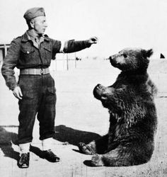 """""""Wojtek the soldier bear"""". /WWII/ Wojtek was officially enlisted in the Polish Army and given the rank of Private"""