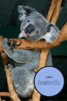 A Week In Sydney - Robyn Around The World