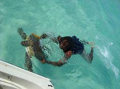 #Swimming with #Turtles @Fishbone Tours, Savannah Sound, Eleuthera, Bahamas