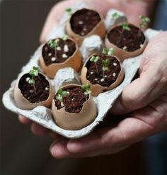 zaaien in een eiersc