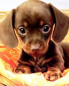 20 Cachorros que te DERRETIRÁN el corazón con su extrema ternura ⋮ Es la moda