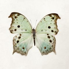 Color Me Butterfly - Nature Photography, Pastel Mint Green, Spring Photograph, Easter, Garden, Nursery Wall Art, Minimal Home Decor. $30.00, via Etsy.