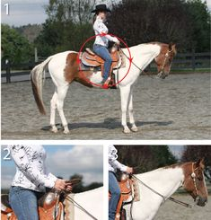 A Better Backup. Learn proper hand and body position to achieve willing, correct backward motion from your horse. Equestrian Outfits, Equestrian Style, Riding Hats, Types Of Horses, Horse Training, Horseback Riding, Dressage, Horse Stuff, Horse Care