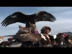 Wolf killing Tibetan Golden Eagles trained and commanded by MAN!