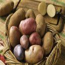 Las patatas nos aportan energía, antioxidantes, regulan la tensión arterial y son diuréticas ecoagricultor.com