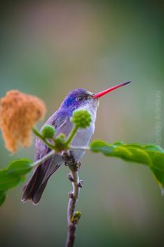 Colorful Hummingbird by Alex Arámburu on 500px**