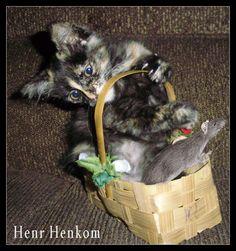 cuidado ratinho a gatinha é valente.