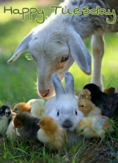 90 Best Happy Tuesday Images Happy Tuesday Animals