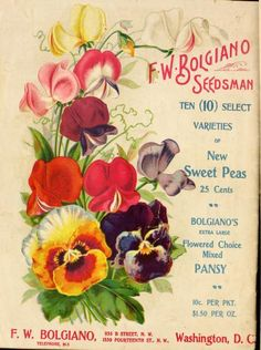 1901 - Bolgiano's new century catalogue 1901 : - Biodiversity Heritage Library. #BHLinbloom