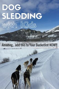 Looking for things to do in Steamboat Colorado. Have you ever thought about dog sledding? This unique experience is one of the BEST winter activities I have ever done. And, surprisingly ages 2-99 will love it!! .   .   . Find more Family Travel Tips and Tricks including how to save on airfare on my blog- www.GlobalMunchkins.com