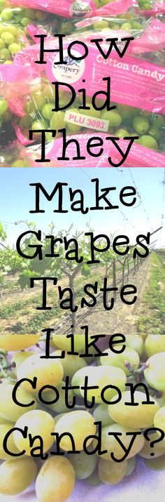 How Did They Make Grapes That Taste Like Cotton Candy? Was it on purpose or a lucky discovery? There are non-GMO. Cotton Candy Grapes, Cotton Candy Flavoring, Kinds Of Fruits, How To Make Greens, Sticky Fingers, Green Grapes, Discovery, Purpose, Tasty