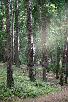 forests of czech republic | jesus-tree-3.jpg czech republic, europe, images, jesus, sumava forest ...