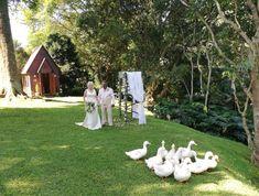 #macnutfarm #weddingvenue #instawedding #kznweddings #gardenweddings #countryweddings