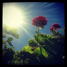 #primavera#flores #olores #colores #alegriaaaa