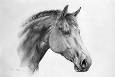 Happy Birthday hope you like it it's yours now! Peer by Pierre. Horse Head Drawing, Pony Drawing, Horse Drawings, People Drawings, Easy Drawings, Pencil Drawings Of Animals, Creature Drawings, Animal Sketches, Art Sketches