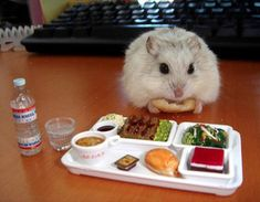 Hamster enjoying lunch...