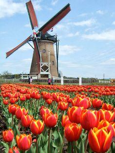 Zaanse Schans Valley ,Netherlands