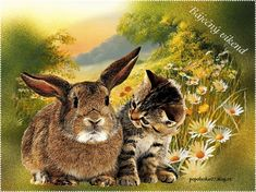 Kangaroo, Cute Cats, Rabbit, Friends, Brown, Amazing, Photos, Animals, Birds