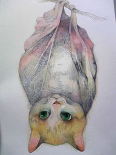 Kitty Cocoon or Pupating Pussycat. Drawing Painting Images, Weird Pictures, Kawaii, Artist Art, Cool Cats, Cat Art, Animal Photography, Fantasy Art, Cute Animals