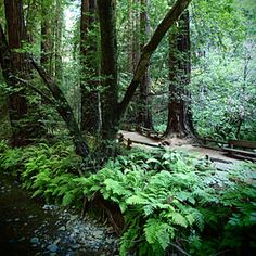Top 9 National Monuments | Muir Woods National Monument, California | Sunset.com  Amazing place to hike in peace