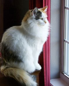 mostlycatsmostly:  Window Seat (by The Good Brat)