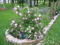 Rose Orders Landscaping Shrubs, Shrub Roses, Garden Plants, Landscape, Winter, Flowers, Gardens, Winter Time, Scenery