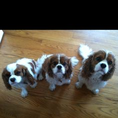 The babies post bath time - Tucker, Libby and Winston!