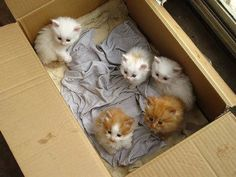 TOP 40 Cats and Kittens Pictures