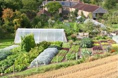 Welcome to the website of Charles Dowding! This site shows productive ways to grow food, for harvests over long periods,  using a lovely way of caring for soil - undug and with a light covering of compost on top, based on my experience of growing vegetables without tillage for thirty years.  There is also information in my books, courses, talks and videos, for less weeds and more harvests. | www.charlesdowding.co.uk