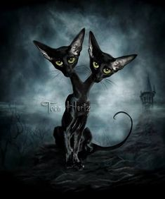 """Siamese Cats"" by Toon Hertz"