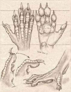 Pawed Dragon Hand Anatomy Study by RussellTuller on DeviantArt Animal Sketches, Animal Drawings, Art Sketches, Art Drawings, Dragon Drawings, Mythical Creatures Art, Fantasy Creatures, Creature Concept Art, Creature Design