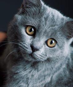 chat un peu triste